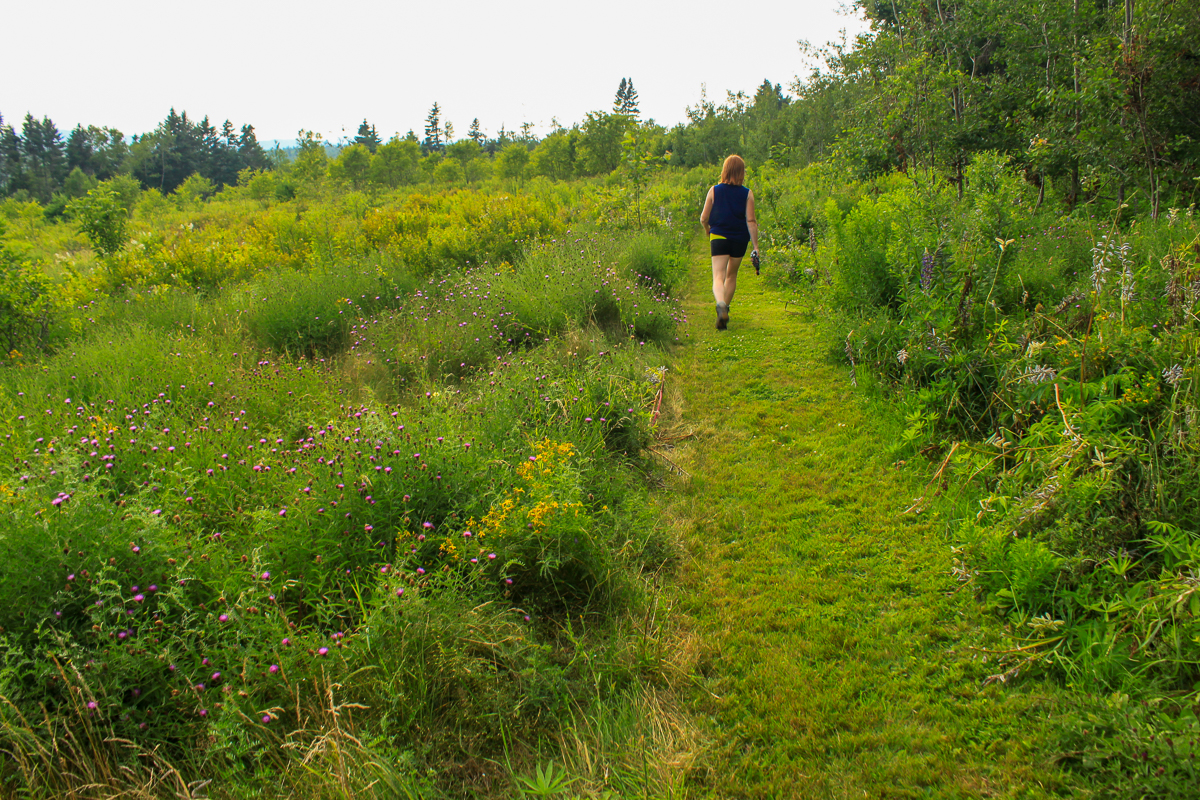Meadow Trail at the Rossmount Inn