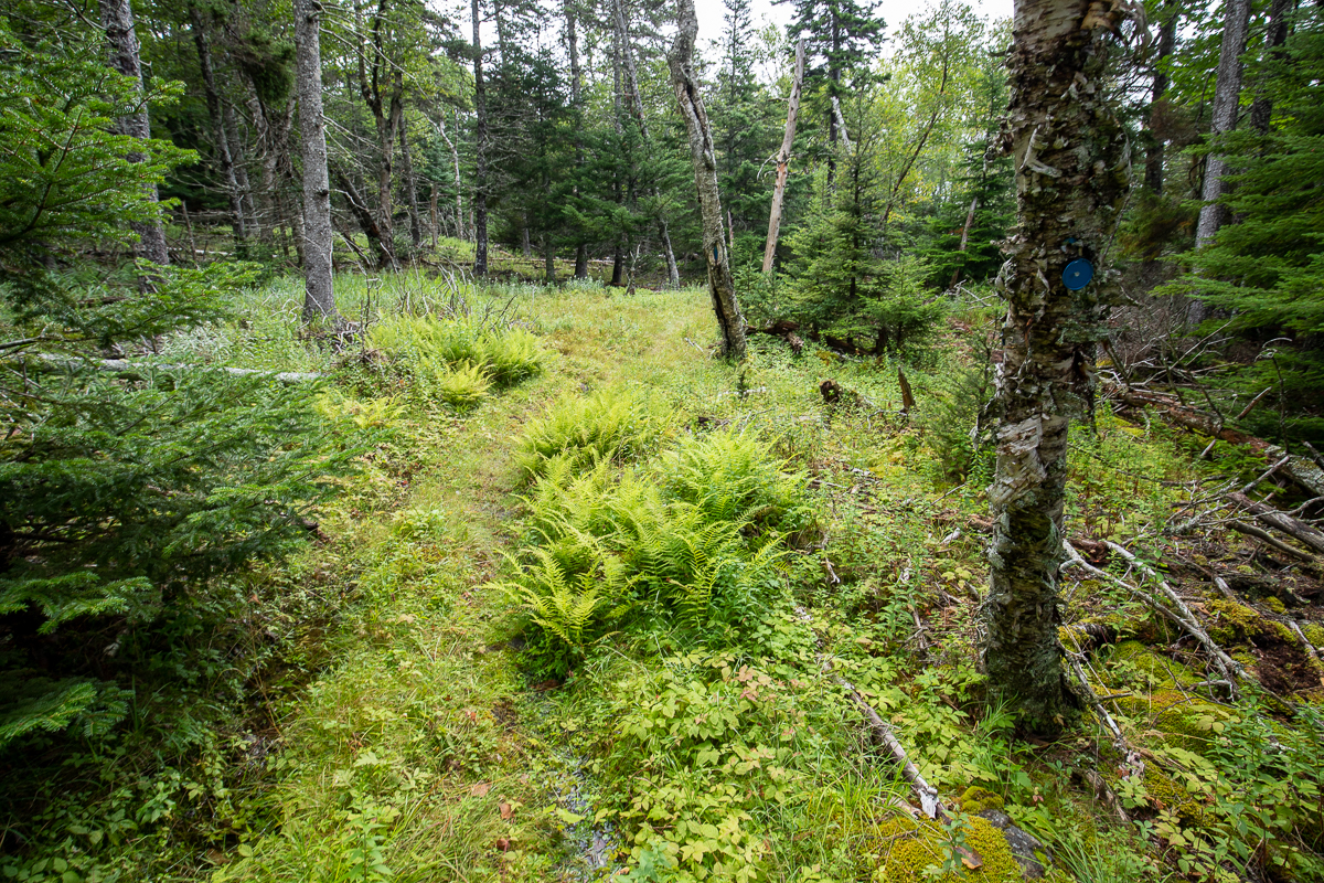 Lighthouse Trail Access - Eel Lake to Indian Beach Gallery