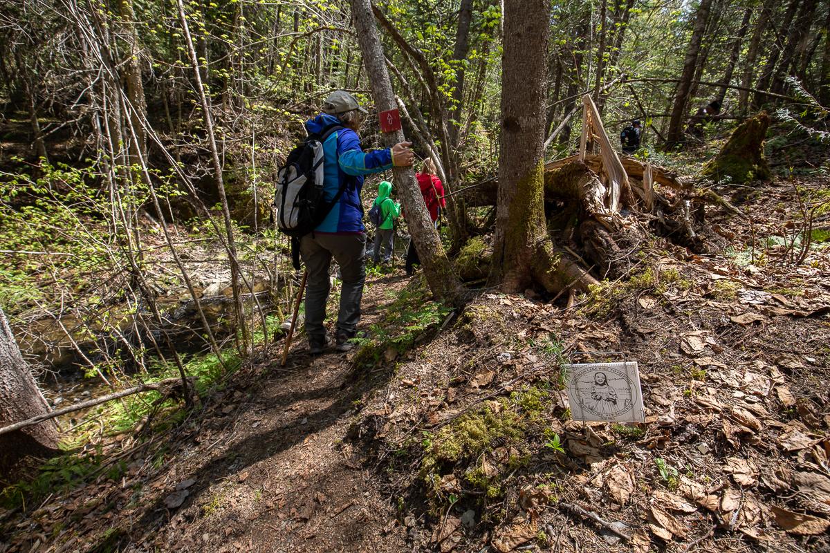 Tomlinson Lake Trail